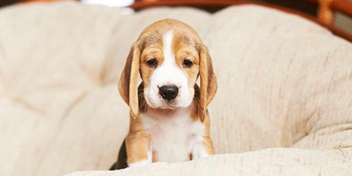 New Puppy Training Course - 8 Weeks