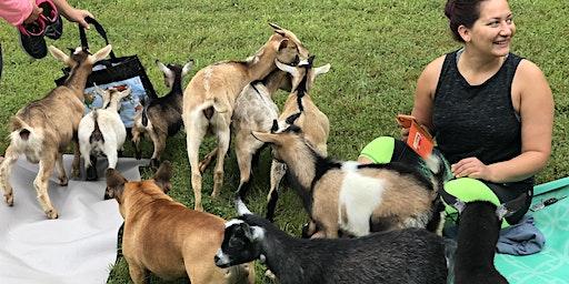 Baby Goat Yoga at Restoration Acres