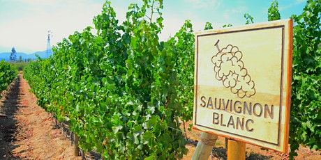 Sauvignon Blanc from around the world tickets