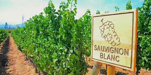 Sauvignon Blanc from around the world