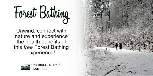 Seniors Forest Bathing