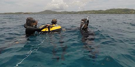 Beginner Freediver Course tickets