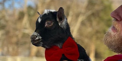 Goat Yoga Nashville- Goat any Love