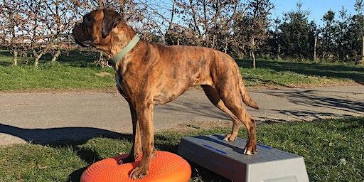Massage en body&balance: Jouw hond soepel en fit