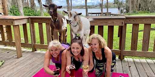 Goat Yoga Tampa plus free drink! In the Loop Brewing; Land O Lakes 1/26/20