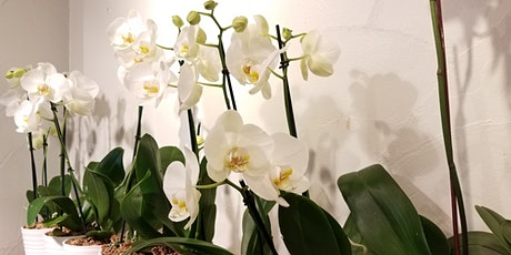 Orchids 101 tickets