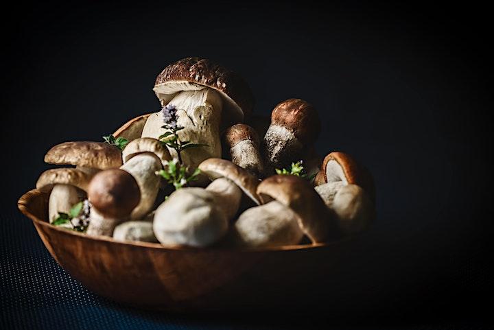 Imagen de Curso de Elaboración de Micelio Semilla de Hongos Comestibles y Medicinales