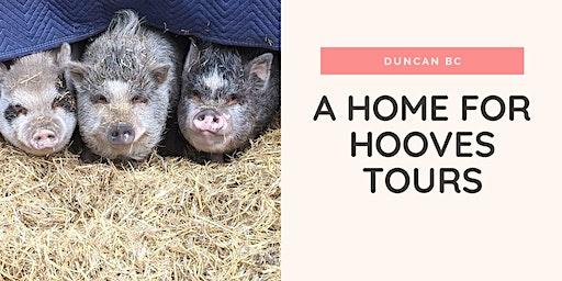 A Home for Hooves Farm Sanctuary Tour