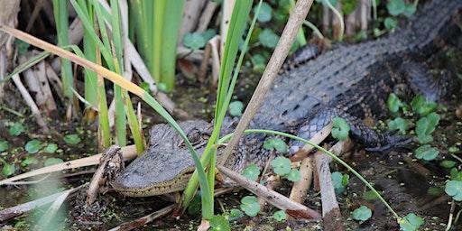 Reptiles at Santee Coastal Reserve