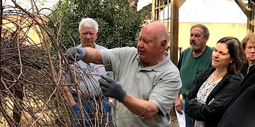 Think Green Thursday: Grapevine Pruning