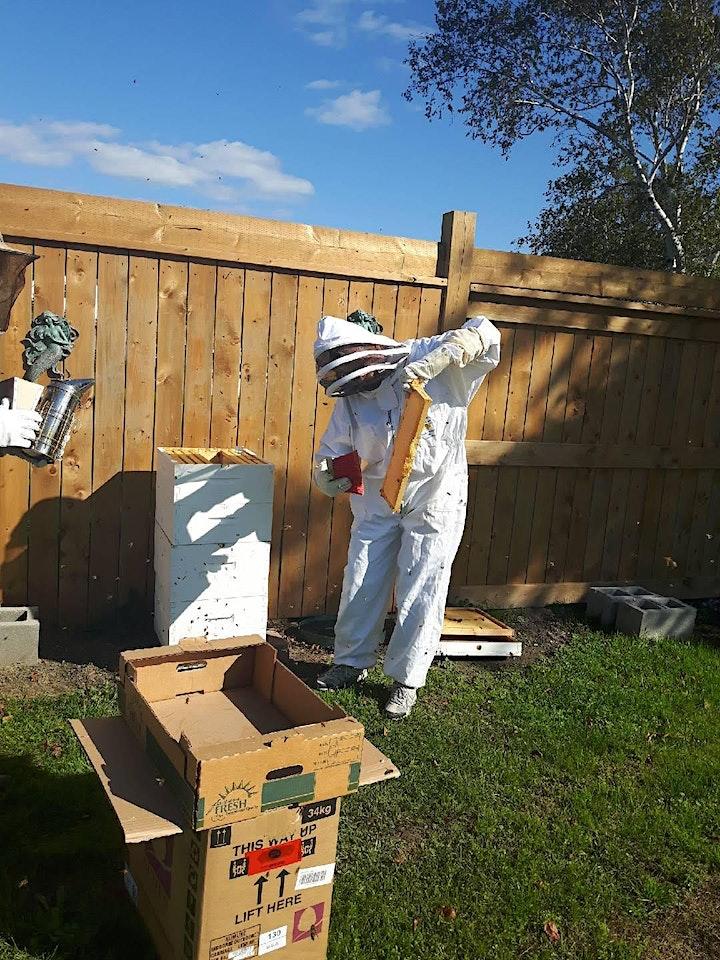 MAKE YOUR OWN BEES WAX WRAP & NATURAL HONEY LIP BALM image
