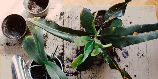 Houseplant Revival and Repotting Workshop