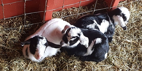 Goodnight Goats tickets