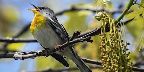 Springtime Songbirds tickets