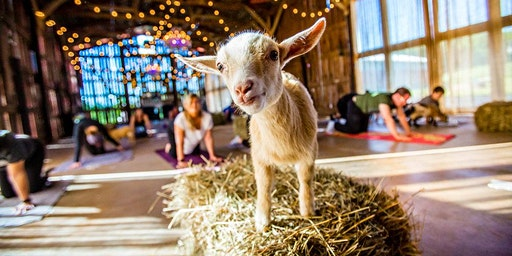 Goat Yoga & a Latte