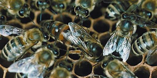 Bedford Beekeepers Queen Rearing Class