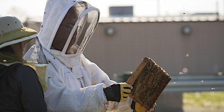 Bedford  Beekeepers Bee Intensive VII tickets