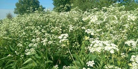 Hedgerow Foraging Springtime tickets