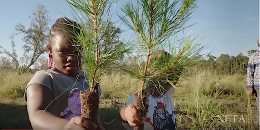 America's Forests in South Carolina: Sustaining African American Land