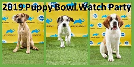 AHeinz57 Puppy Bowl Watch Party