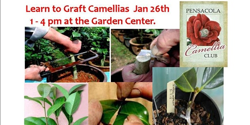Learning to Graft Camellias