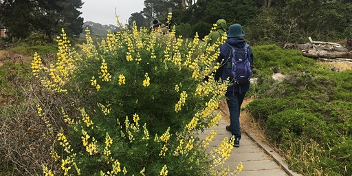 Field Trip - Lobos Creek Valley, Presidio of San Francisco