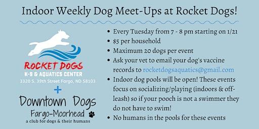 Weekly Dog Meet-Ups at Rocket Dogs!
