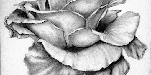 Learn the Fundamentals of Graphite Drawing - Level 2 - Intermediate