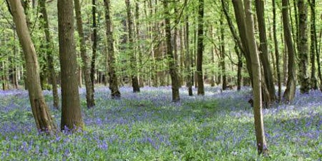 Forest bathing among the bluebells tickets