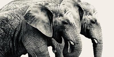 The Elephants Escape