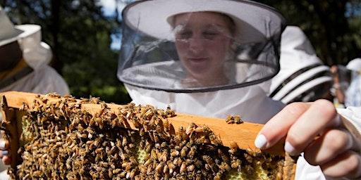Spring 2020 Beginner Beekeeper's Short Course