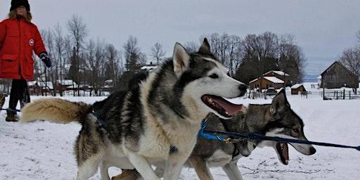 Great Ice! Sled Dog Rides