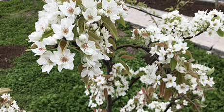Dormant Fruit Tree Pruning tickets
