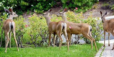 Dealing with Deer tickets