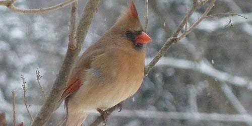 February Bird Monitoring Walk
