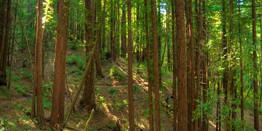 Sam McDonald History Nature Hike