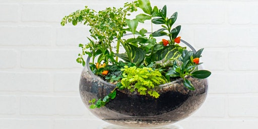Create and Sip: Terrarium Container Workshop - Gainesville
