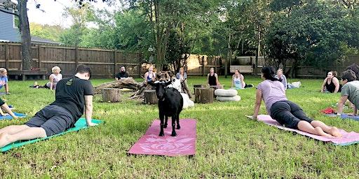 Summerville Goat Yoga at Flowertown Charm Mini-Farm