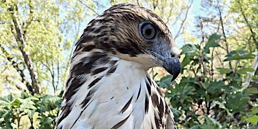 Wildlife Program: Ruffner Raptors
