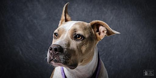 Pups and Pics - Be My Valentine at Wag Dog Emporium (3:30pm - 4pm)