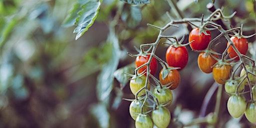 Food Forward Presents: Creative Home Farming with Joanna Bassi
