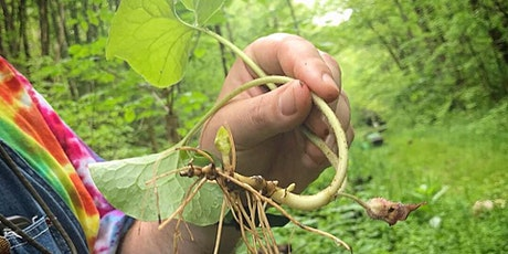 Spring Foraging Workshop and Hike tickets