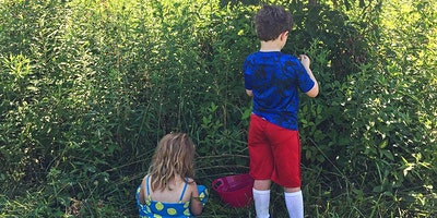 Summer Foraging Workshop and Hike