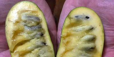 Pawpaw Foraging & Cultivation Workshop and Hike