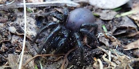 Bush Explorers - 'Wild Wednesday' - Autumn Bug-Hunt - Riverview Road tickets