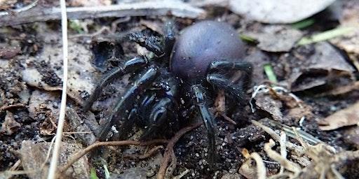 Bush Explorers - 'Wild Wednesday' - Autumn Bug-Hunt - Riverview Road