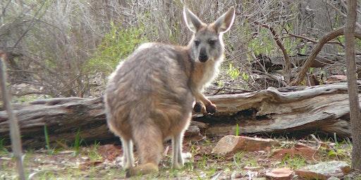 Bush Explorers - 'Autumn Almanac' Nature Walk - Spring Creek Reserve