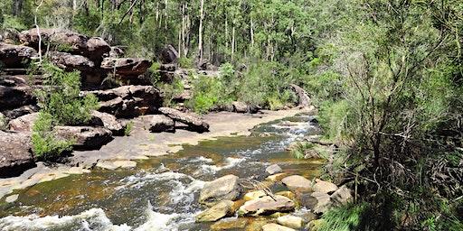 Bush Explorers - 'Autumn Almanac' - Nature Walk - Frere's Crossing Reserve