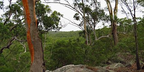 Bush Explorers - 'Autumn Almanac' - 'Serenity Stroll' - Scattergood Reserve tickets