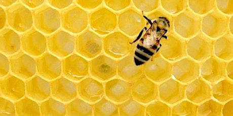 Bee keeping 101 tickets